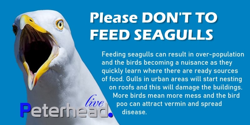 Reasons not to feed seagulls